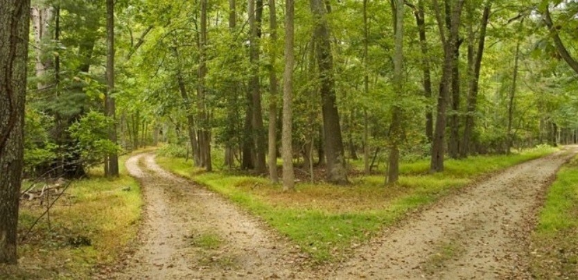 Waldweg Gabelung